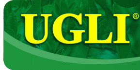 UGLI - The Exotic Tangelo from Jamaica